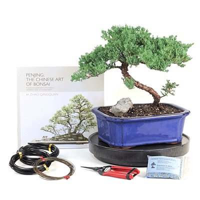 Bonsai Care Kit